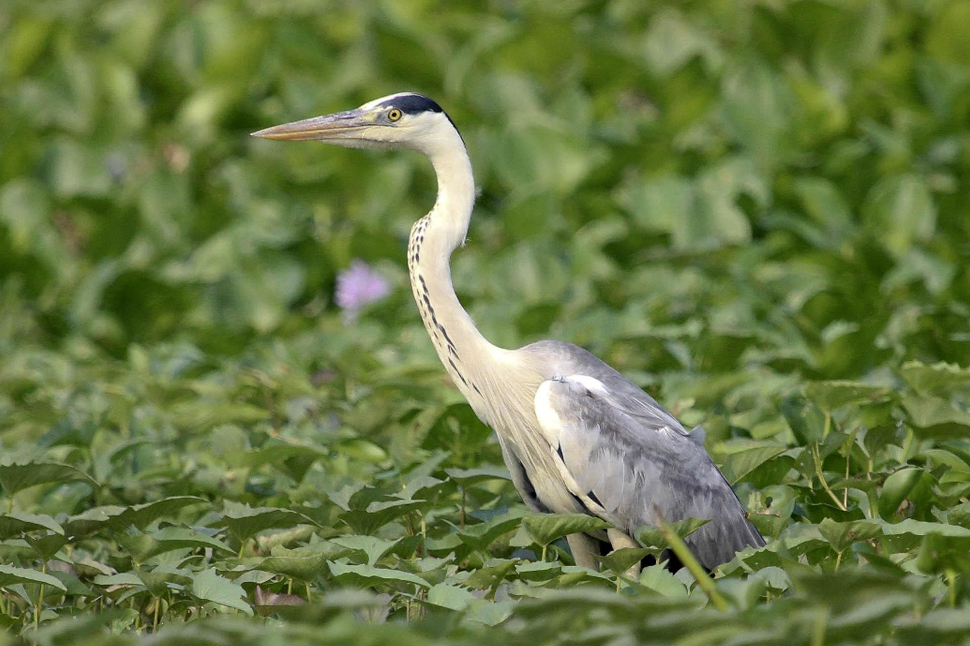 Birding in Siem Reap at Phnom Krom