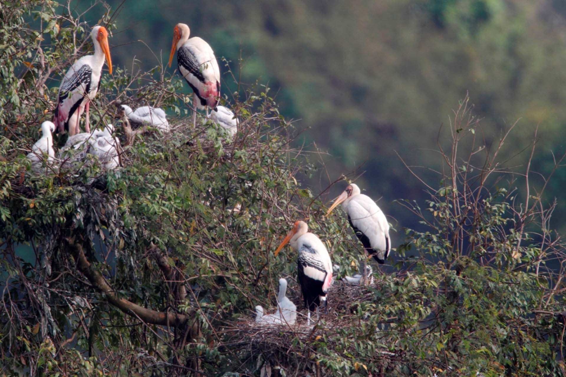 Milky Stork with Painted Stork