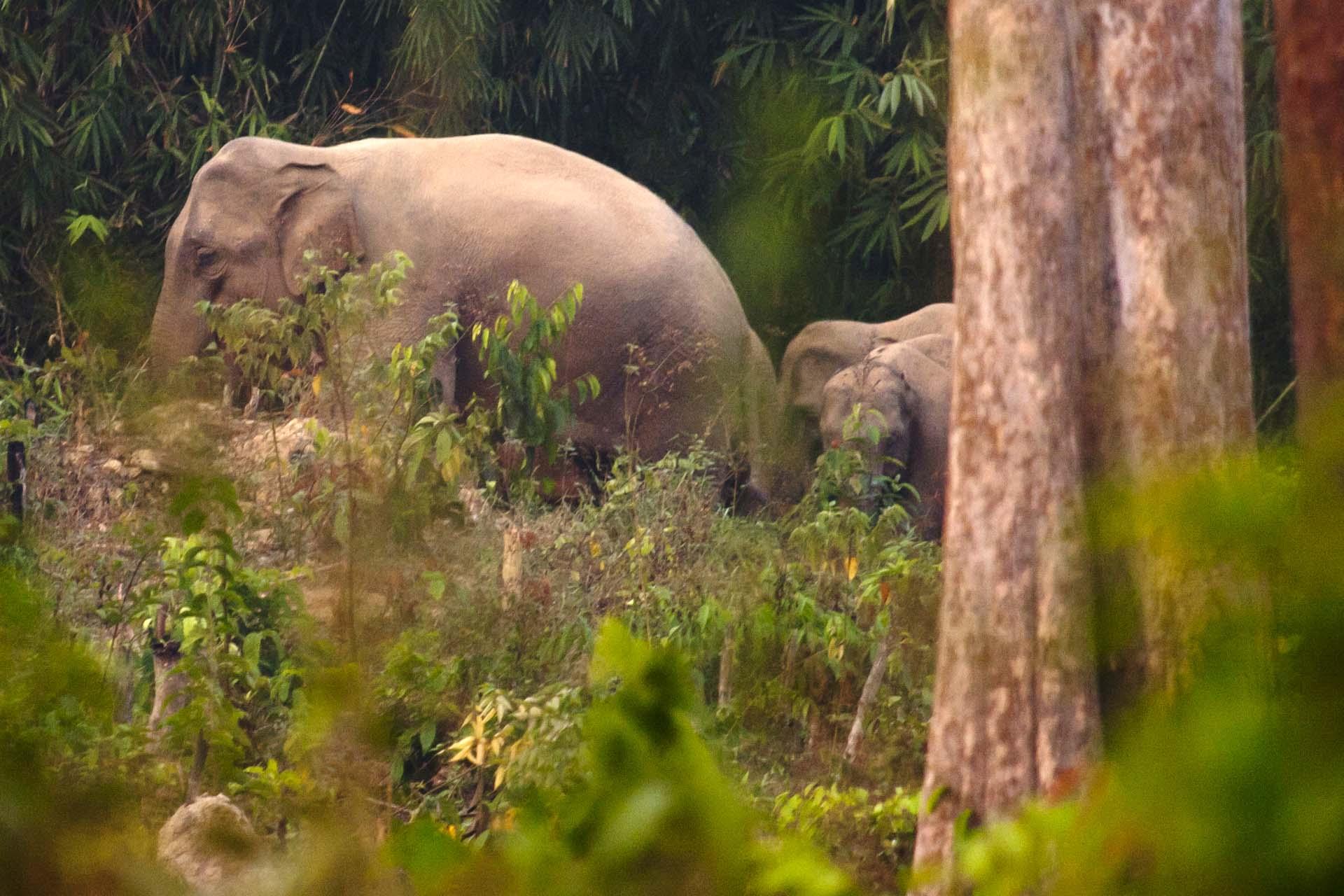 Elephant at Keo Seima Wildlife Sanctuary