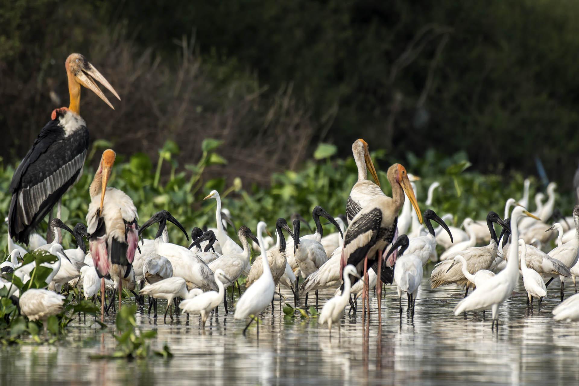 Cambodia Bird Guide Association