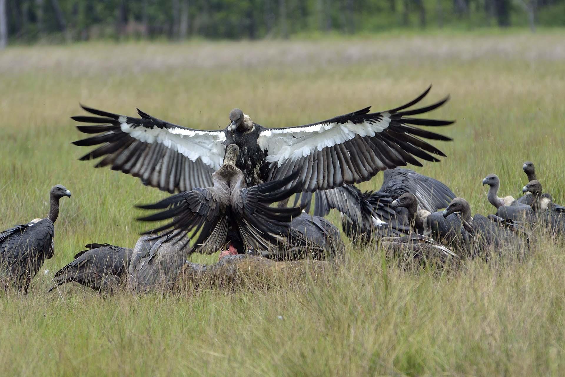Vulture Restaurant
